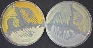 petri-dish-1
